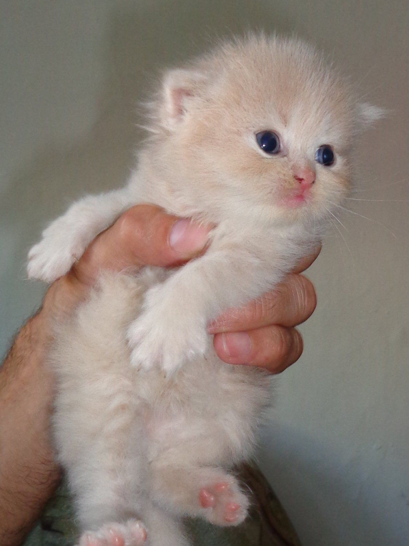 Котята которым месяц картинки