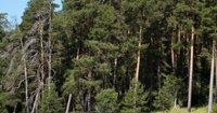 В реестр недвижимости внесены границы лесничеств Кузбасса