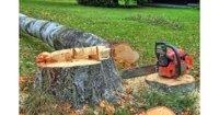 Заготовил дрова незаконно