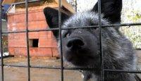 В экологическом центре появилась чернобурая лисица